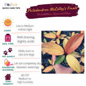 Philodendron McColley's Finale - Care Card