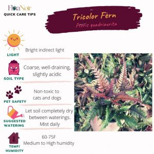Tricolor Fern - Care Card