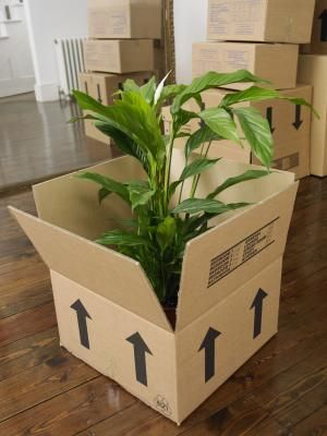 moving-with-plants